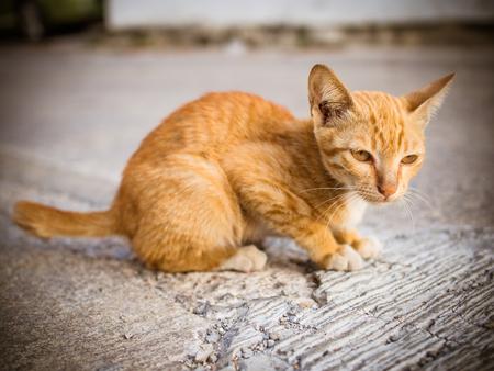stray: Poor stray cat paranoia