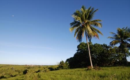 palma: Palma