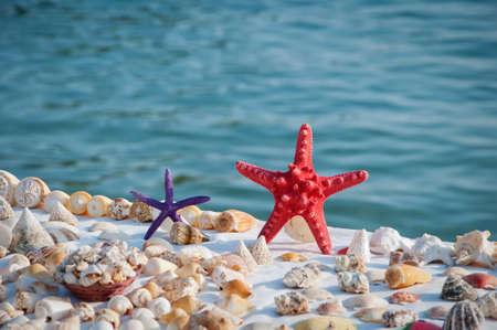 Starfish and shells on a beach photo