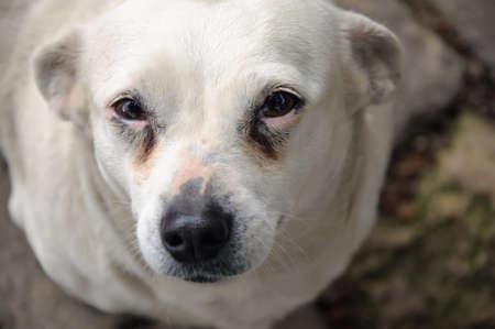 Sad dog eyes photo