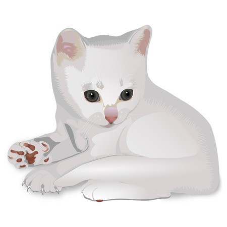 aside: The white grey kitten on a white background lays and looks aside