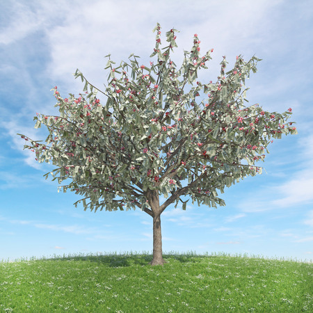 Tree with money leaves - spring Zdjęcie Seryjne