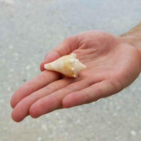 Hand holding shell photo
