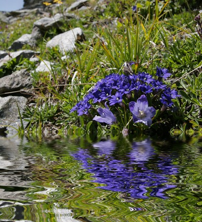 reflektion: Flowers Stock Photo