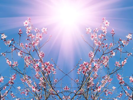 Apple Blossoms Stock Photo - 4732747