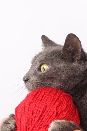 Cat with woolen ball photo