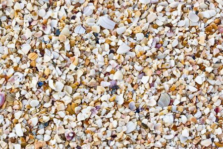 Backgroung of shells at the sea shore photo