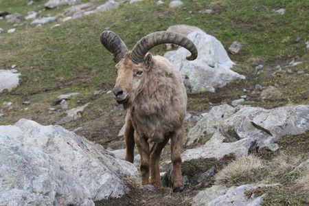 flink: Goat