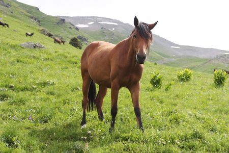 A beautiful horse is in mountains photo