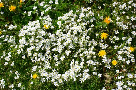 Colorful flowers on the green meadow Stock Photo - 5222207