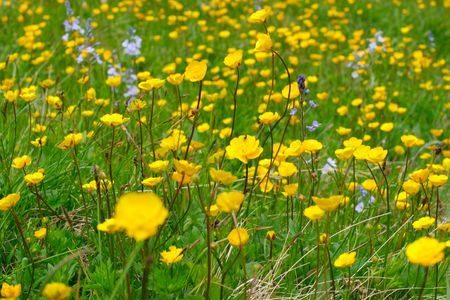 Colorful flowers on the green meadow Stock Photo - 5222164