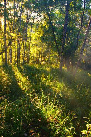 Sunset   Stock Photo - 5499005