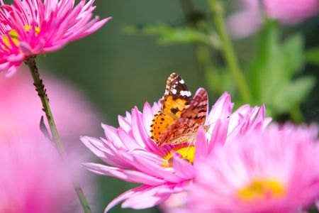 Colorful butterfly on a flower  photo
