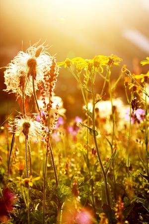 Sunny alpine meadow photo
