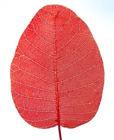 aural: Sunlight goes through red leaf