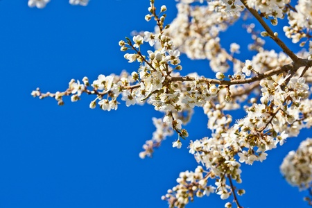 Tree branch in bloom photo