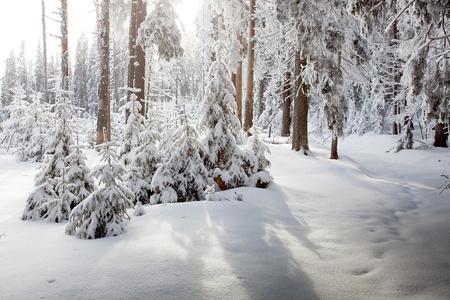 north woods: Winter Stock Photo