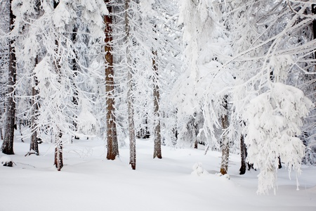 snowy mountain: Winter Stock Photo