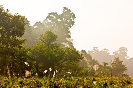 Chitwan jungles photo