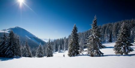carpathian: Carpathian winter mountains