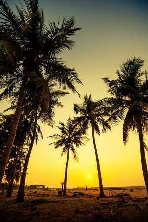 sihlouette: Sihlouette od palm trees at the seashore in Sri Lanka Stock Photo