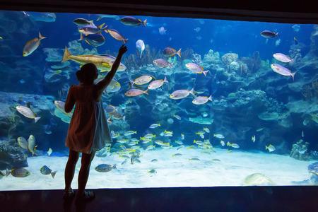Mensen observeren vissen in het aquarium Stockfoto