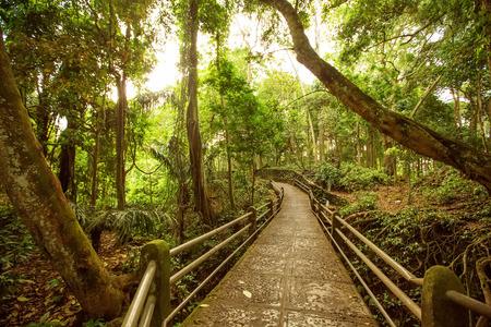 ubud: Monkey forest in Ubud, Bali