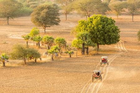bullock: Bullock carts transport local people and tourists around the temples of Bagan, Myanmar Stock Photo