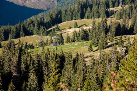 habitable: Small village in autumn Carpathian mountains