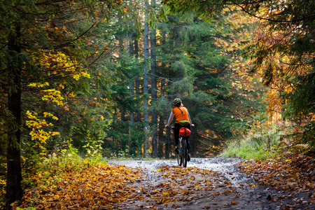road bike: Mountain biker in autumn forest