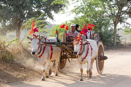 bullock: Bullock carts transport local people and tourists around the temples of Bagan, Myanmar Editorial