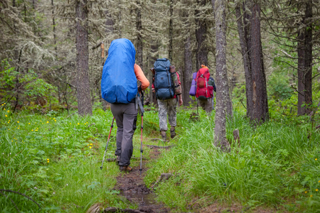 hiking: Company of young people are hiking in Altai mountains Stock Photo
