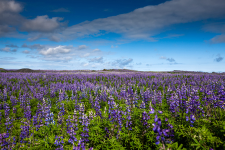 View at Icelandic plains during summertime