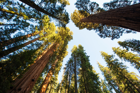 kings canyon national park: Sunset in Sequoia national park in California, USA Stock Photo