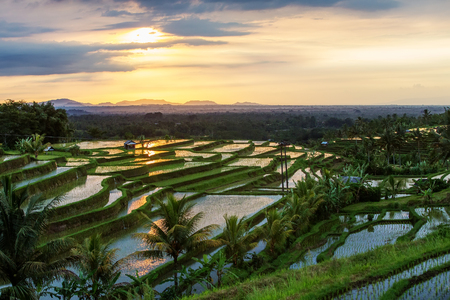 View to the Jatiluwih rice terraces at sunrise on Bali island, Indonesia
