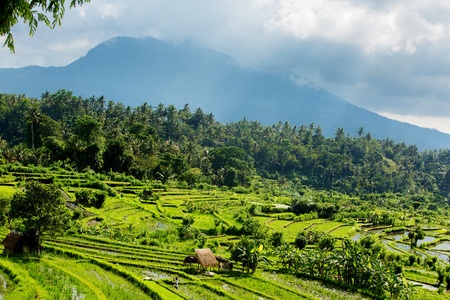 Rice terraces on Bali island, Indonesia Stock Photo