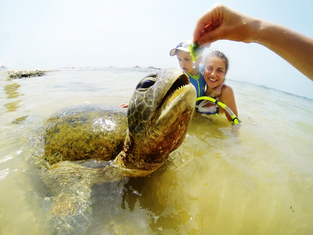 Family snorkeling with turtle  at the tropical coast of Sri Lanka
