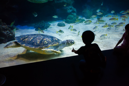 People watch for the sea life in the oceanarium of Kuala Lumpur