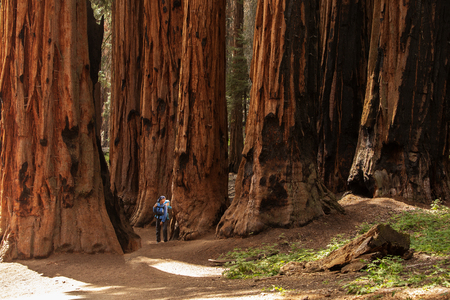 Mother with infant visit Sequoia national park in California, USA Stock Photo