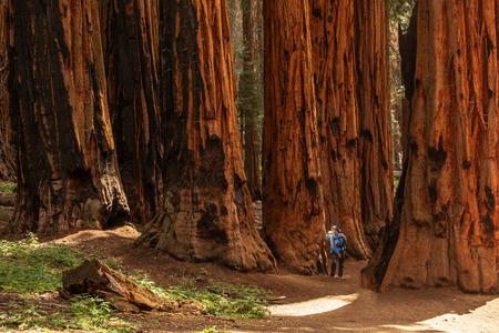 Mère avec bébé visite le parc national de Sequoia en Californie, USA Banque d'images
