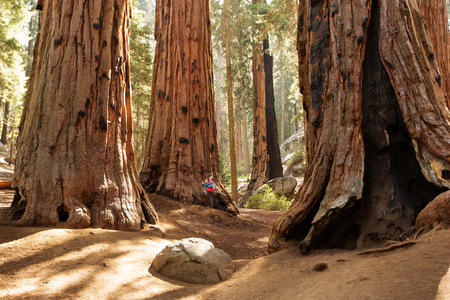 Mother with infant visit Sequoia national park in California, USA Archivio Fotografico