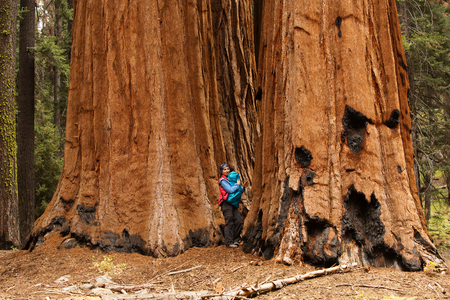 Mother with infant visit Sequoia national park in California, USA 版權商用圖片