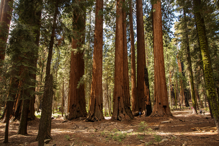 Mother with infant visit Sequoia national park in California, USA 写真素材