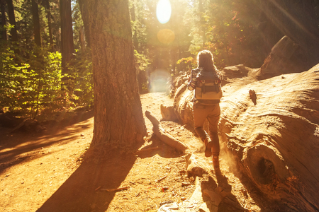 Woman in Yosimite national park near sequoia in California, USA