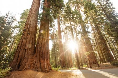 Tramonto nel parco nazionale di Sequoia in California, USA
