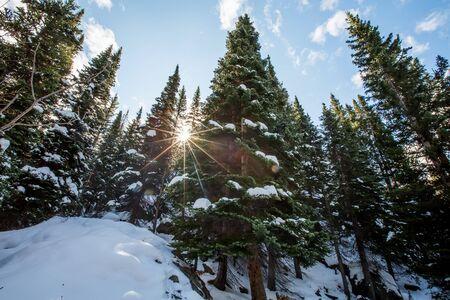 Beautiful fir tree in winter forest