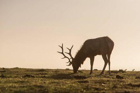silhouette of deer on beautiful sky background