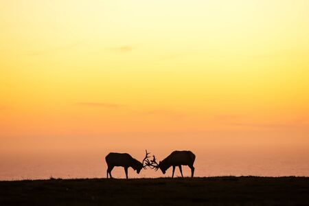 silhouette of deer on beautiful sky background Stock Photo