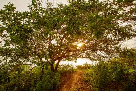 Big beautiful tree in sunset time 版權商用圖片