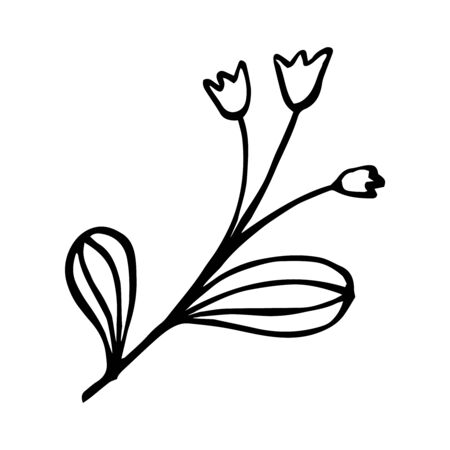 Twig in doodle style. For greeting cards . Hand drawn vector illustration in black ink. Isolated outline.
